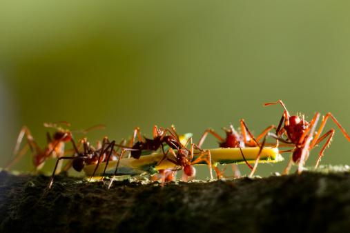 Effort「Leafcutter Ants, Costa Rica」:スマホ壁紙(12)