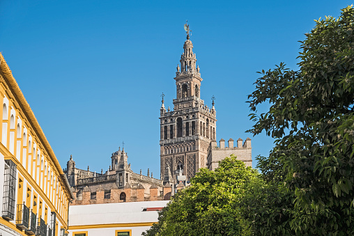 Branch「Spain, Andalusia, Seville, La Giralda bell tower of Seville cathedral with tree top in foreground」:スマホ壁紙(7)