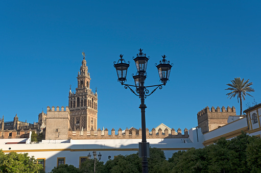 Palm tree「Spain, Andalusia, Seville, La Giralda bell tower of Seville cathedral with ornate street light in foreground」:スマホ壁紙(3)