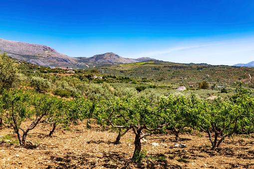春「Spain, Andalusia, Periana, Olive plantation in spring」:スマホ壁紙(6)
