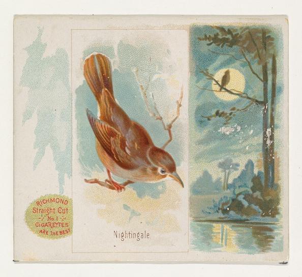 Songbird「Nightingale」:写真・画像(3)[壁紙.com]