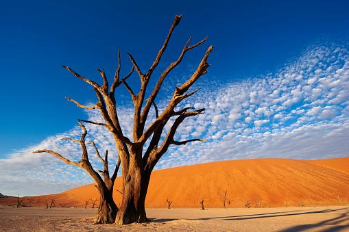 Lake Bed「Salt pan. Dead Vlei.Namibia」:スマホ壁紙(16)