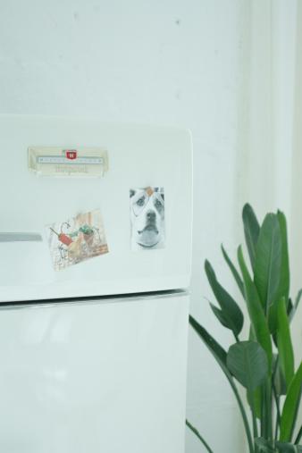 写真「Refrigerator and plant」:スマホ壁紙(18)