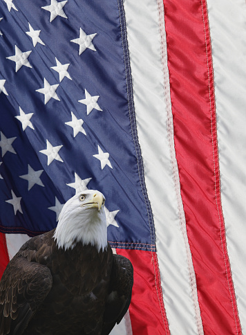 Fourth of July「Bald Eagle American Flag Vertical Background」:スマホ壁紙(18)