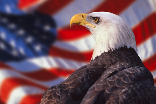 Patriotism「Bald eagle and american flag」:スマホ壁紙(9)