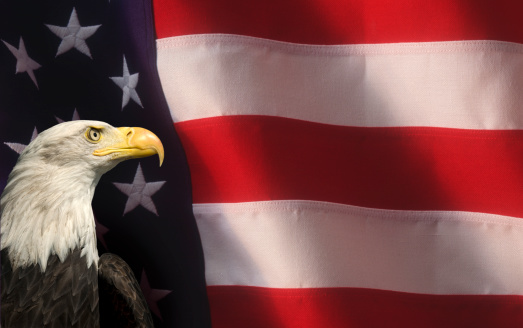 Beak「Bald Eagle with American Flag Close Up」:スマホ壁紙(7)