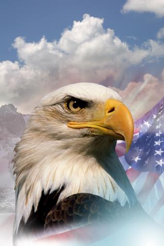 Patriotism「Bald eagle with American flag」:スマホ壁紙(5)