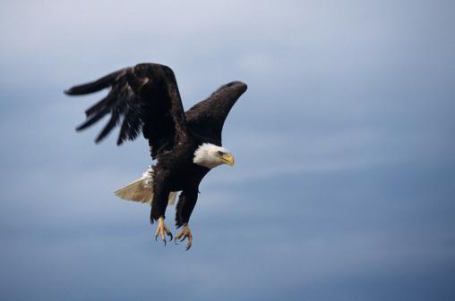 鷲のスマホ壁紙 検索結果 [15] 画像数4266枚   壁紙.com