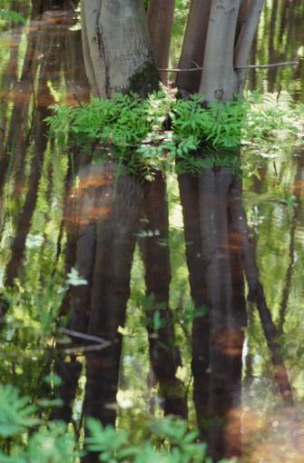 Frond「Trees in swamp」:スマホ壁紙(10)