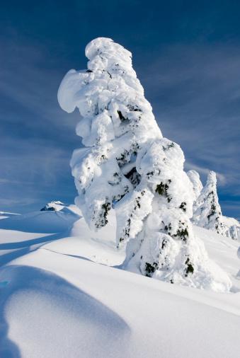 Snowdrift「Mountain Hemlocks (Tsuga mertensiana) encrusted in snow and ice on Kulshan Ridge, Heather Meadows Recreation Area, North Cascades, Washington, USA」:スマホ壁紙(9)