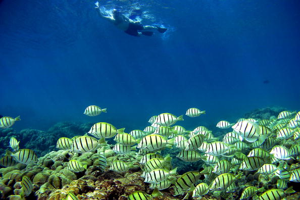 Maui「Coral Reefs In Danger」:写真・画像(14)[壁紙.com]