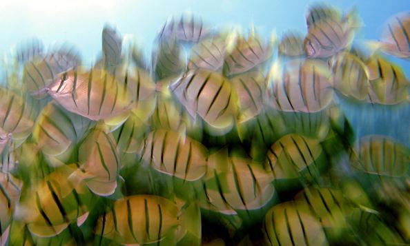 Hanauma Bay「Coral Reefs In Danger」:写真・画像(6)[壁紙.com]