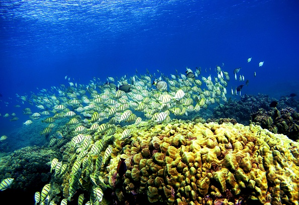 Maui「Coral Reefs In Danger」:写真・画像(15)[壁紙.com]