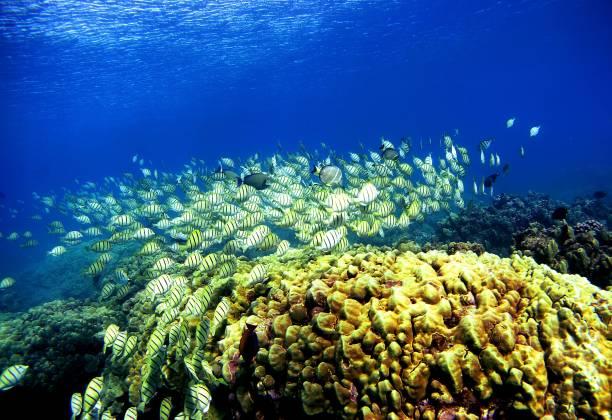 Coral Reefs In Danger:ニュース(壁紙.com)