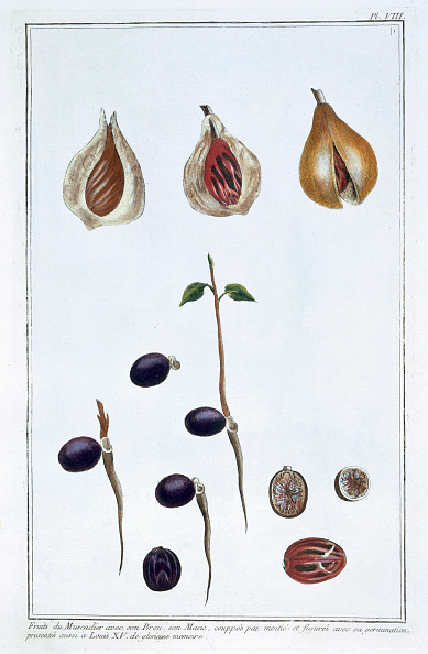 Spice「Nutmeg circa 1751-1807」:写真・画像(17)[壁紙.com]