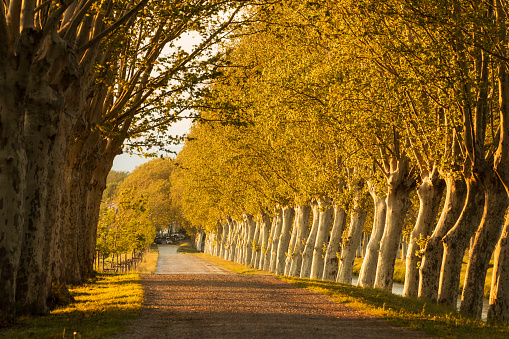 Footpath「A line of trees on a road in Languedoc, France」:スマホ壁紙(3)
