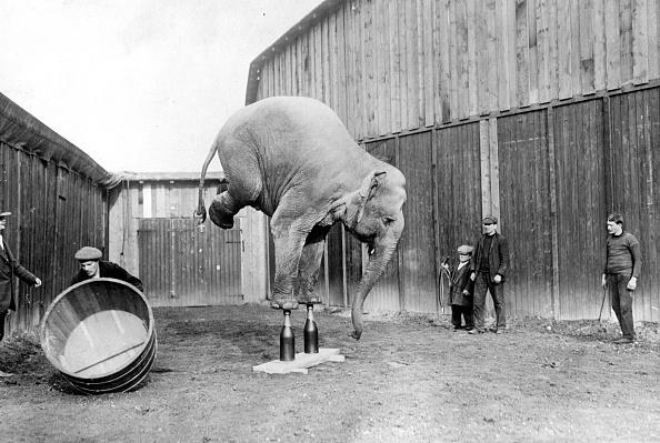 サーカス「Circus Elephant」:写真・画像(11)[壁紙.com]