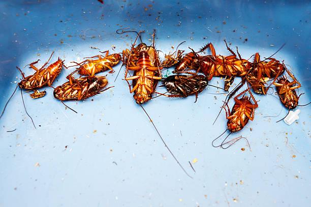 Lots of very dead cockroaches:スマホ壁紙(壁紙.com)