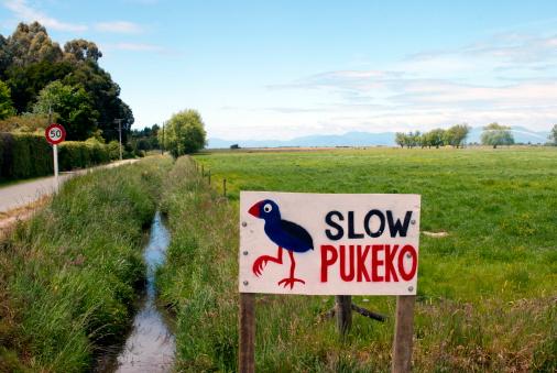 New Zealand Culture「Slow Pukeko Sign and Rural Scene」:スマホ壁紙(14)