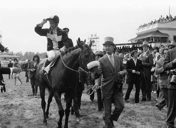Horse「Mill Reef Racehorse」:写真・画像(3)[壁紙.com]