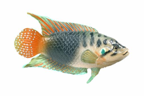 大昔の「Plastic Fish」:スマホ壁紙(6)