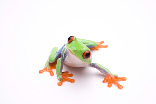 Frog「Vibrant photo of a tree frog, on a white background」:スマホ壁紙(19)