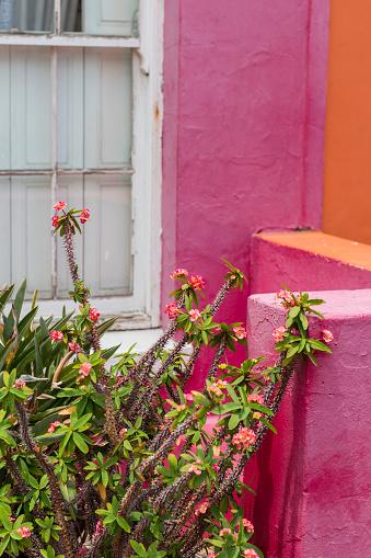 Malay Quarter「Colorful house details at Bo Kaap」:スマホ壁紙(9)