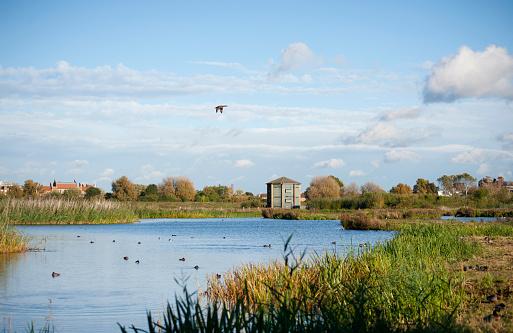 Flock Of Birds「WWT London Wetland Centre」:スマホ壁紙(8)