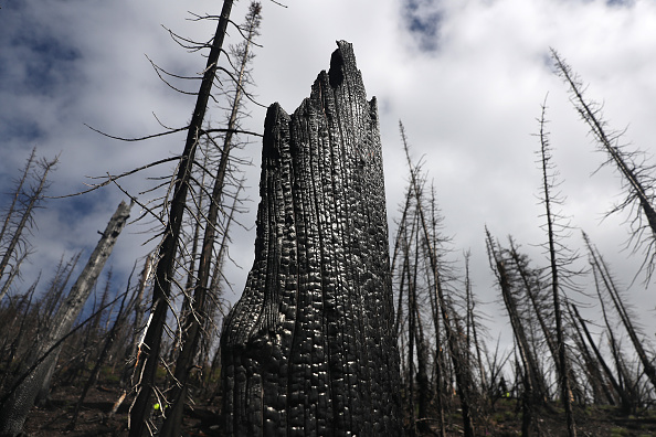 Burnt「Montana Forests Struggle With Climate Change」:写真・画像(16)[壁紙.com]