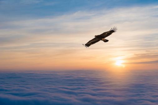 Eagle - Bird「Soaring eagle」:スマホ壁紙(12)