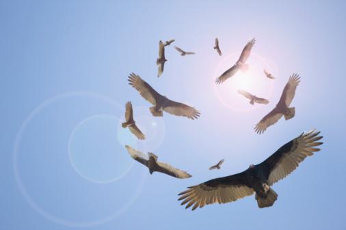 Flock Of Birds「The End Is Near」:スマホ壁紙(6)