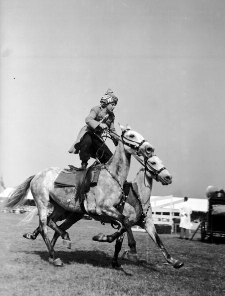 動物「Daring Horseman」:写真・画像(9)[壁紙.com]