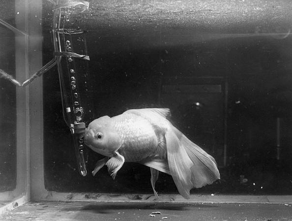 Monty Fresco「Rare Fish」:写真・画像(10)[壁紙.com]