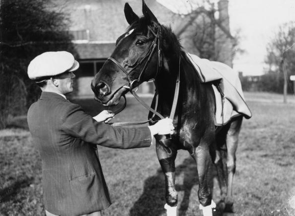 Horse「Great Steeplechaser」:写真・画像(4)[壁紙.com]