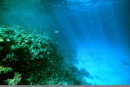 海「海中の背景」:スマホ壁紙(10)