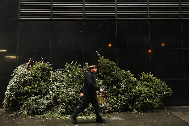 Discarded Christmas Trees Await Collection From City For Mulching:ニュース(壁紙.com)