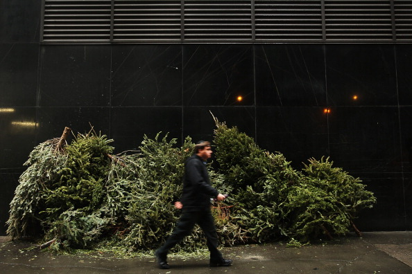 Environmental Conservation「Discarded Christmas Trees Await Collection From City For Mulching」:写真・画像(12)[壁紙.com]