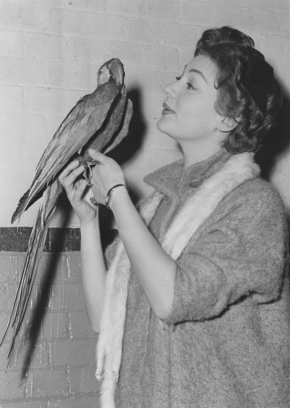 鳥「Adele Leigh」:写真・画像(15)[壁紙.com]