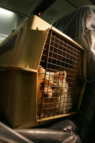 LAX Airport「Rescue Flights Bring Animal Victims Of Katrina Out Of Gulf Coast」:写真・画像(1)[壁紙.com]