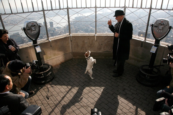 Empire State Building「Uggie Visits The Empire State Building」:写真・画像(8)[壁紙.com]