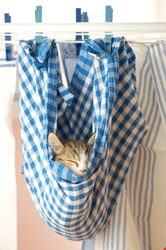 子猫「A kitten asleep in a hanging dishcloth」:スマホ壁紙(17)
