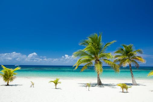 Roatan「Tropical Palm Trees on Beach」:スマホ壁紙(7)