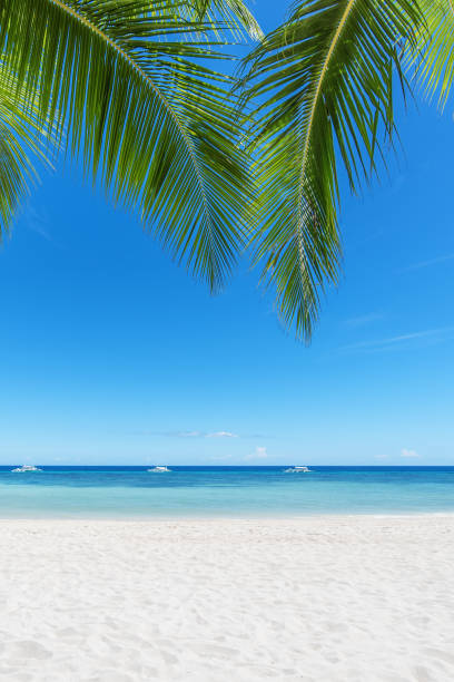 Tropical paradise beach and palm leaf:スマホ壁紙(壁紙.com)
