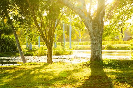Nature Reserve「Tropical park in Cuba」:スマホ壁紙(14)