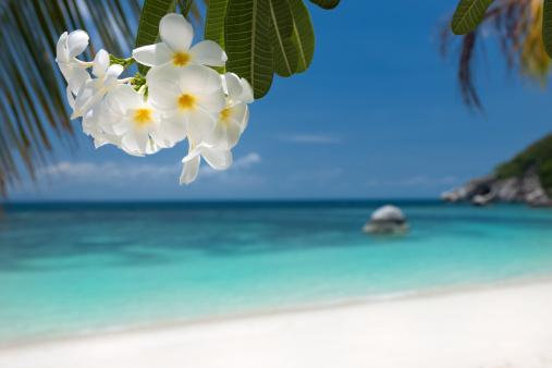 Frangipani「Tropical Paradise Beach (XXXL)」:スマホ壁紙(4)