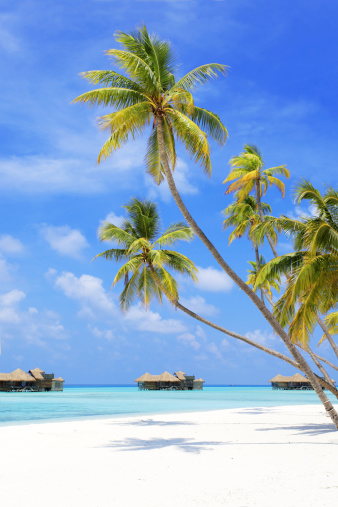 Indian Ocean「Tropical paradise in Maldives.」:スマホ壁紙(10)