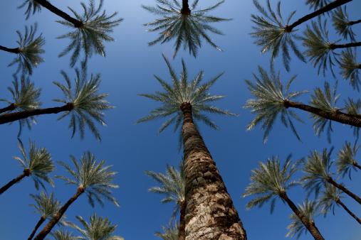 Grove「Tropical Palm Trees in Grove Against Blue Sky, Fisheye」:スマホ壁紙(19)