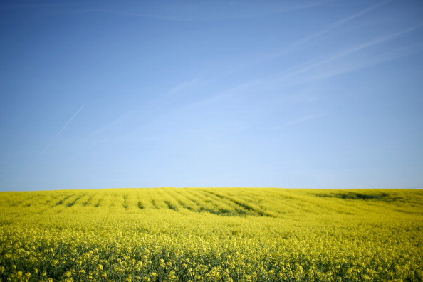 太陽の光「Price Of Farmland Rising Faster Than Prime London Property」:写真・画像(15)[壁紙.com]