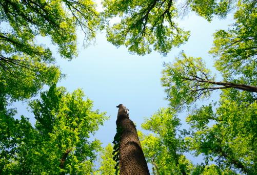 春「ミヤマ森林」:スマホ壁紙(19)