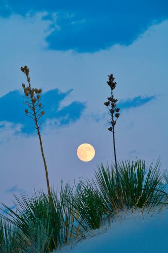 月「Full Moonrise and Yuccas」:スマホ壁紙(2)